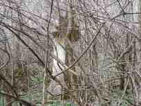 Гробље у Голињеву